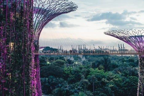 The canopy walkway at Gardens by the Bay in Singapore / Visualhunt