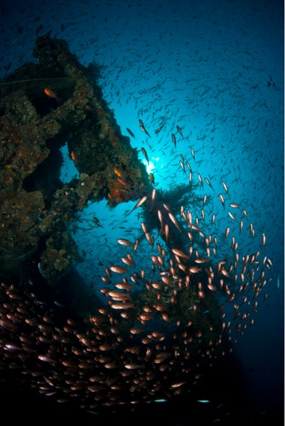 Wreck dive, Brunei. Image courtesy of Brunei Tourism