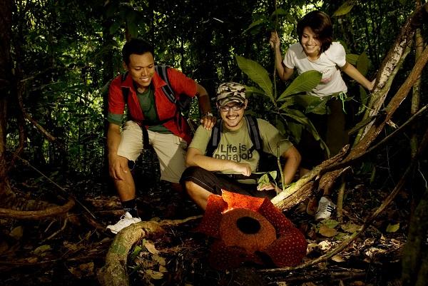 Gunung Gading Park, Sarawak, Malaysia.