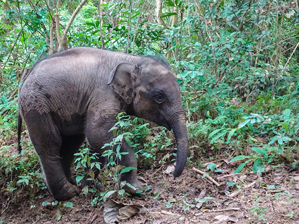 Baby elephant at MandaLao Elephant Sanctuary, Laos