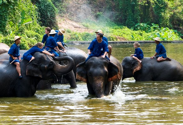 Thai Elephant Conservation Center in Chiang Mai, Thailand. Image courtesy by the Tourism Authority of Thailand, used with permission.
