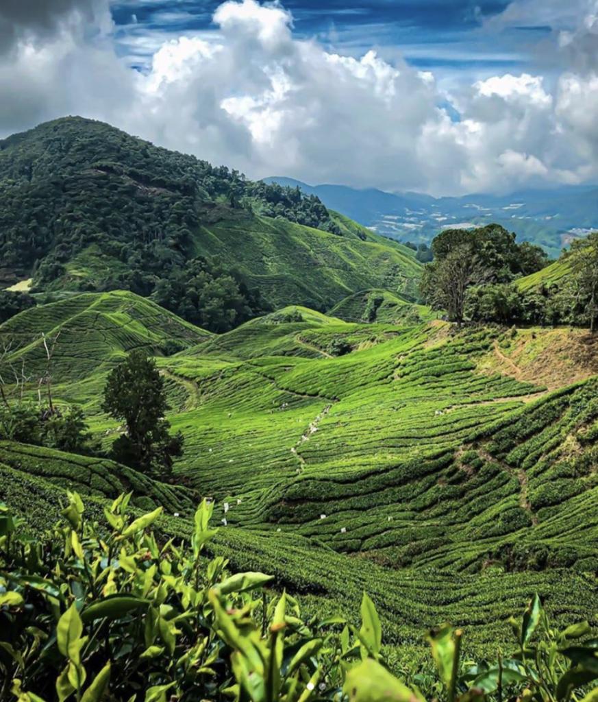 Cameron Highlands | Visit SE Asia