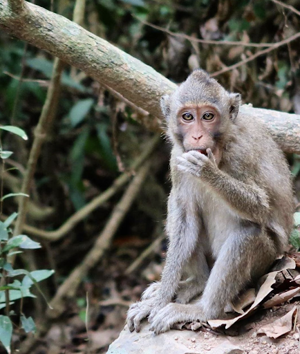 Kep National Park provides an oasis for anyone looking to immerse themselves in nature and wildlife, as you walk, keep your eye out for monkeys, often spotted along the trail.